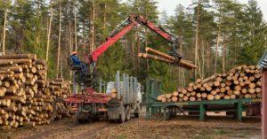 Logger loading wood